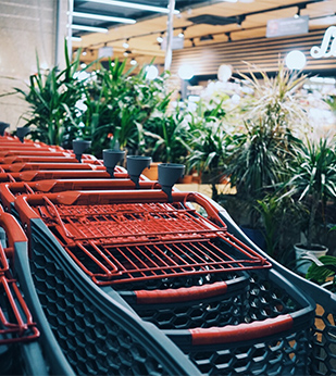 shopping carts in bushes near store