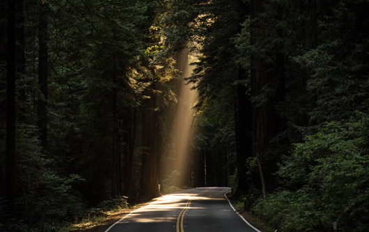 A road running through the forest with a beam of sunlight shining through