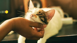 A happy cat getting scratched under the chin