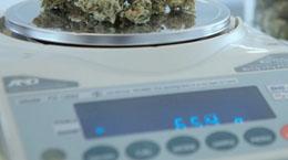 Marijuana being weighed on a digital scalemarijuana on a digital scale